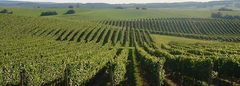 Congresso Latino-Americano de Viticultura e Enologia e Congresso Brasileiro de Viticultura e Enologia