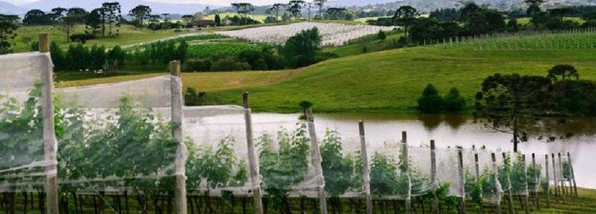 Projeto leva alunos à campo para conhecer produção em vinícolas da Serra e do Meio-Oeste de Santa Catarina
