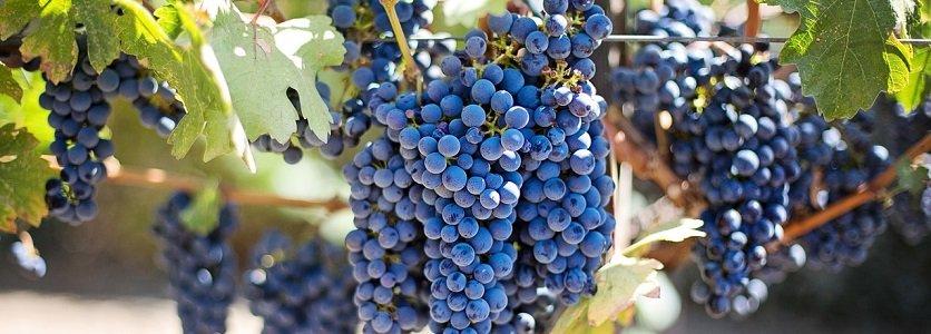O surpreendente Vinho Cabernet Sauvignon