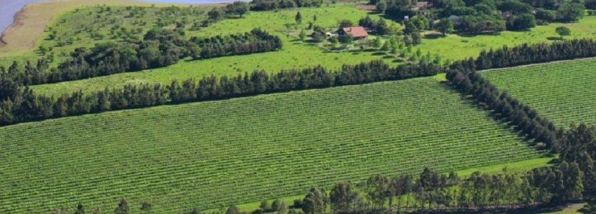 Vinícola Campos de Cima