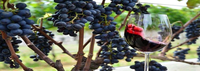 O que é o vinho natural? Veja como ele se difere de outros vinhos