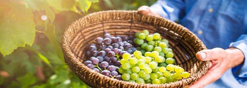 Vinhos e espumantes de SC se projetam pela qualidade