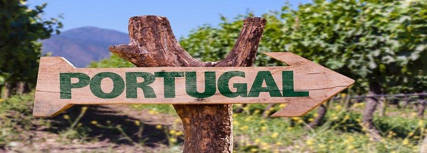 Governo quer Portugal como destino mundial de referência para o enoturismo