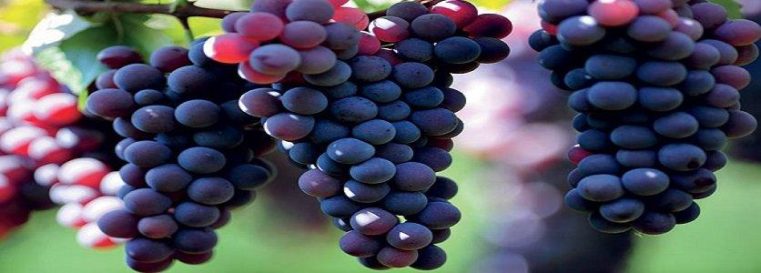 Guia de viagem: 48 horas regadas a vinho em Bento Gonçalves (RS)