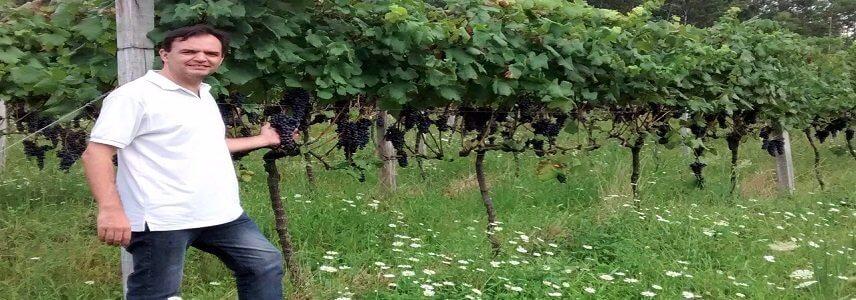 Saiba como os produtores de vinho da região Sul do Brasil estão lidando com o distanciamento social causado pela COVID-19