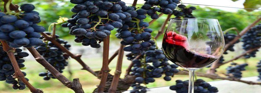 Estudo conclui que beber vinho pode matar células de câncer