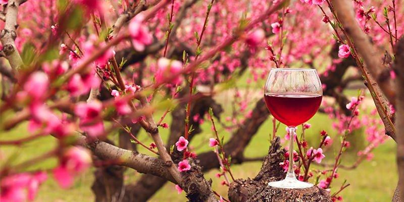 Vinhos para a primavera: 5 bebidas ideais para a estação